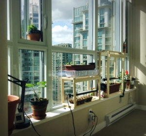 How to Grow an Indoor Garden in Your NYC Apartment