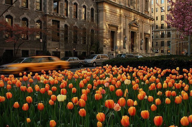 Best Streets: Fifth Avenue and Park Avenue on the Upper East Side