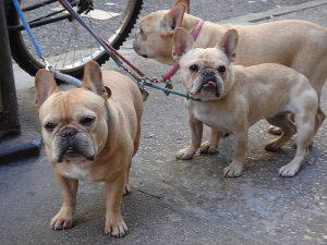8 Dog-Friendly Neighborhoods in NYC