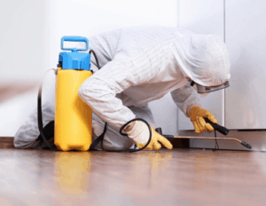 5 Things You Need to Keep in Mind When You Look for a Pest Control Service