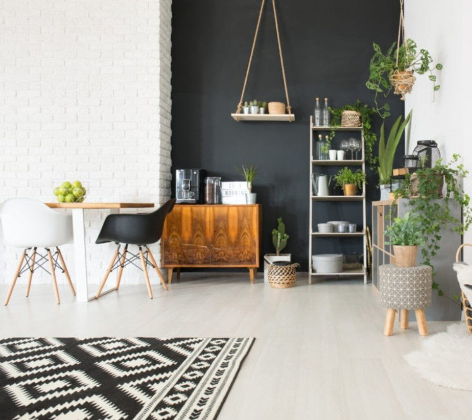 Best Indoor Plants to Purify the Air In Your Apartment